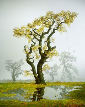 autumn-tree-2001