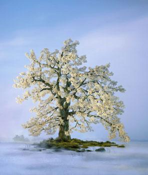 spring-tree-2002