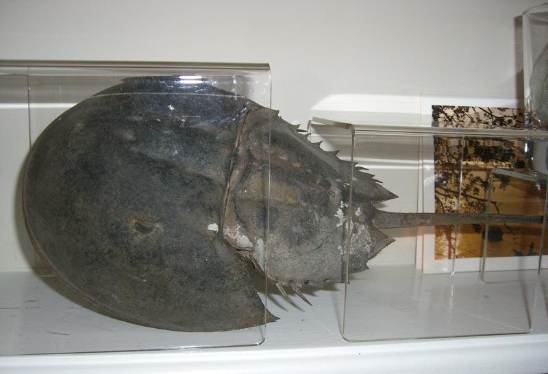 kara crab