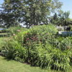 Design Diary: Artist's Garden and Cottage on the Westport River