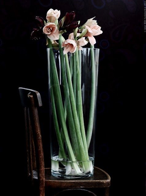 Sunday bouquet amaryllis stylecarrot for Vase amaryllis