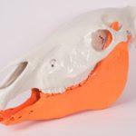 Designer Spotlight: Stephan Alexandr's Painted Skulls