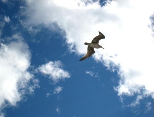 bird-zenitt-society-6