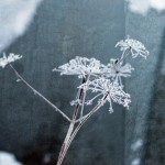 Sunday Bouquet: Frozen and Still