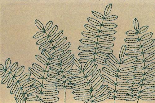 sarah-k-benning-ferns