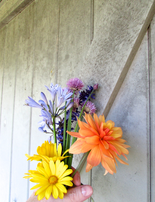 flowers-at-hidden-pond