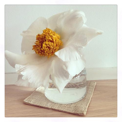 White Peony In White Vase