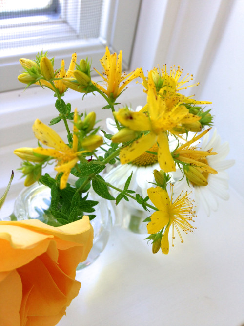 Yellow Flowers In Glass Vase