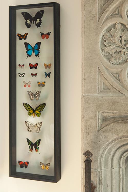 hacin-butterfly-art