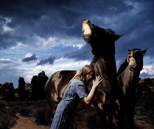 tom-chambers-horse-talk