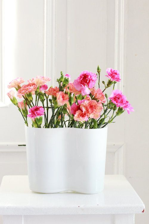 sunday bouquet colorful carnations in alvar aalto vase. Black Bedroom Furniture Sets. Home Design Ideas