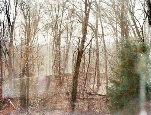 Landscape Photograph By Linda Pagani