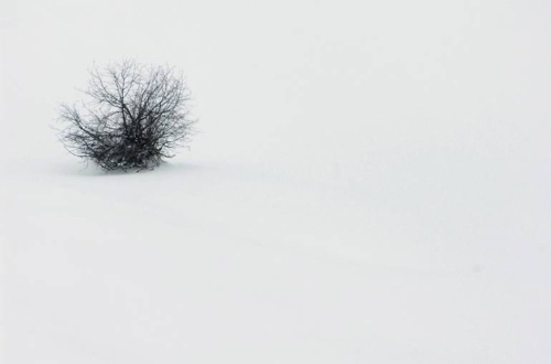 Affordable Artwork Snowy Landscape Photo