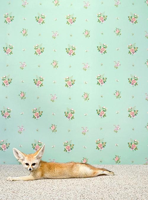 Baby Fox Print By Catherine Ledner