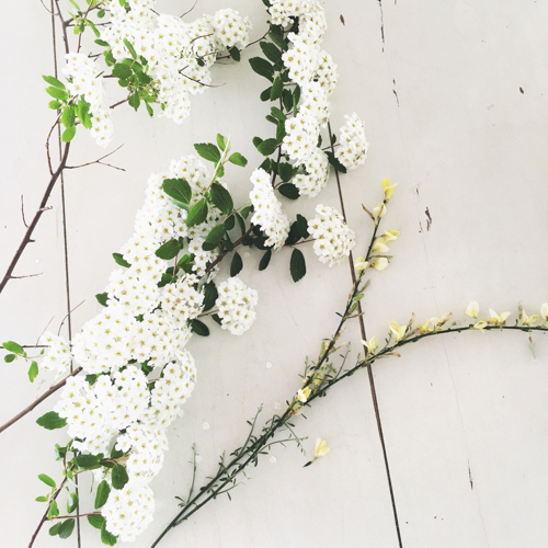 White Flowers On The Table