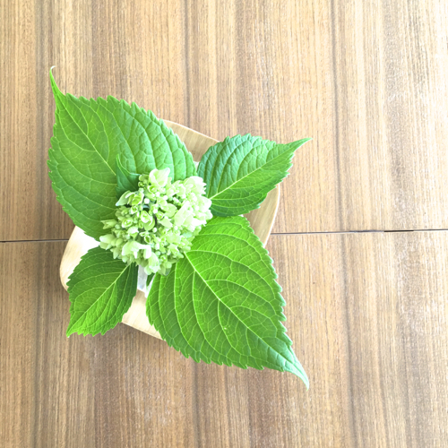 Green Hydrangea on Walnut Tabletop