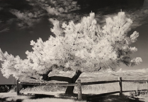 Boston Artist Karen Hosking B&W Photography