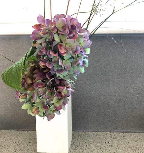 Dried Hydrangea From Summer on Cape Cod